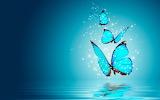 Butterflies - Papallones