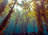 Nature Underwater