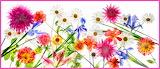 FloralTapestry