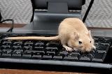 AComputers-Keyboard-Mouse