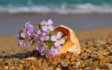 Little pink flowers in shell