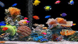 #Tropical Coral Reef Fish