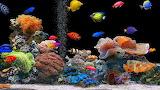 #Tropical Coral Reef Fish