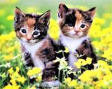 #Cute Calicos