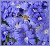 Raindrop Purple