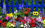 ☺♥ Blue fence...