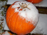 When the frost is on the punkin... 4
