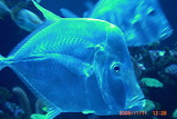 resized_aquarium palma nov. 2008 031 - online jigsaw puzzle - 12 pieces