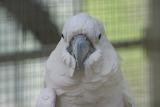 Parrot - 104 pieces
