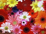 Flowers - online jigsaw puzzle - 35 pieces