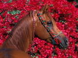 Kůň 1 - online jigsaw puzzle - 63 pieces