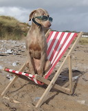 deck chair - online jigsaw puzzle - 42 pieces