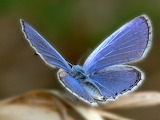 Mariposa - online jigsaw puzzle - 20 pieces