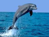 Els dofins de p3B - online jigsaw puzzle - 12 pieces