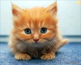 cute-kitten - online jigsaw puzzle - 42 pieces