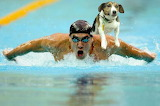 swimming-phelps-jack - online jigsaw puzzle - 40 pieces