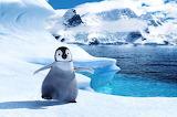 Пингвин - online jigsaw puzzle - 40 pieces