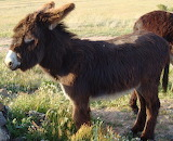 burro - online jigsaw puzzle - 20 pieces