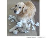 Dog Massacre - online jigsaw puzzle - 42 pieces
